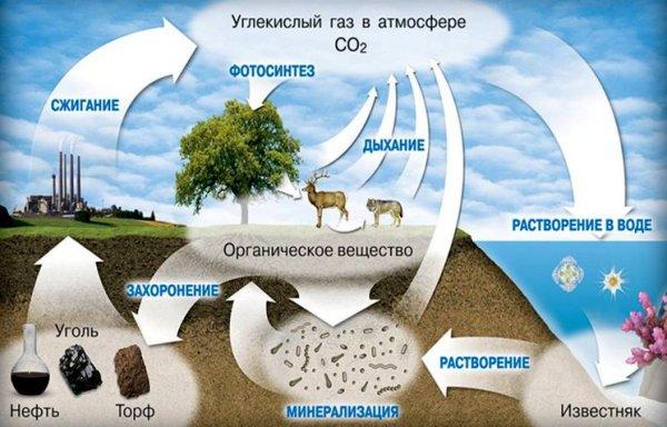 Углекислый газ в природе