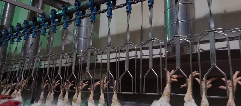 Подвесной цепной конвейер на птицефабрике